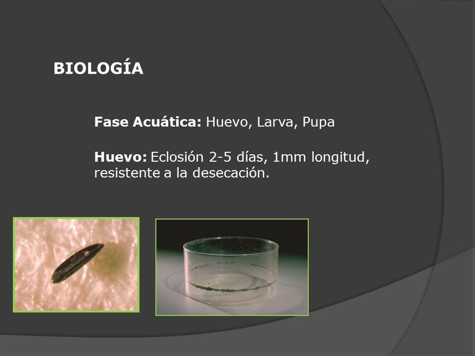 BIOLOGÍA Fase Acuática: Huevo, Larva, Pupa
