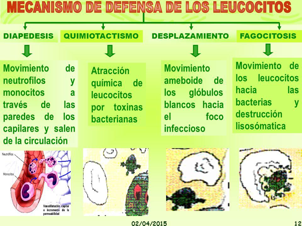 MECANISMO DE DEFENSA DE LOS LEUCOCITOS