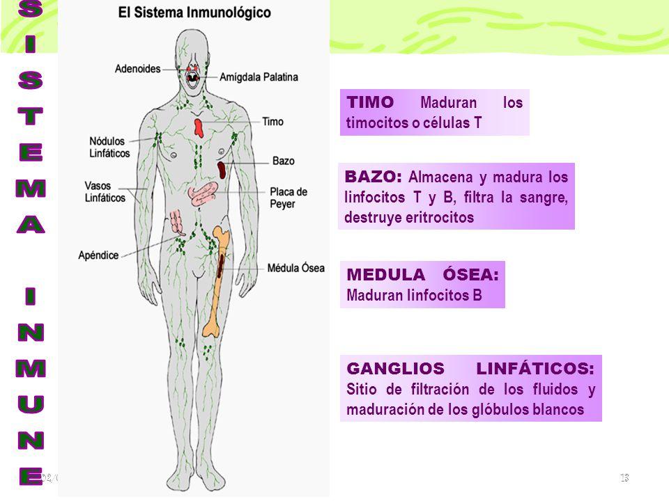 SISTEMA INMUNE TIMO Maduran los timocitos o células T
