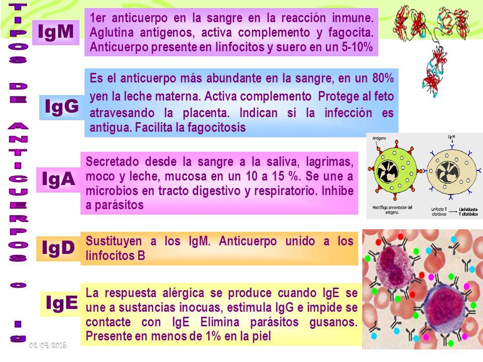 TIPOS DE ANTICUERPOS o Ig