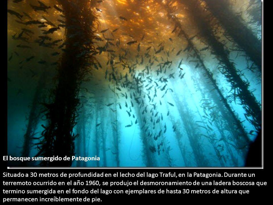 El bosque sumergido de Patagonia Situado a 30 metros de profundidad en el lecho del lago Traful, en la Patagonia.