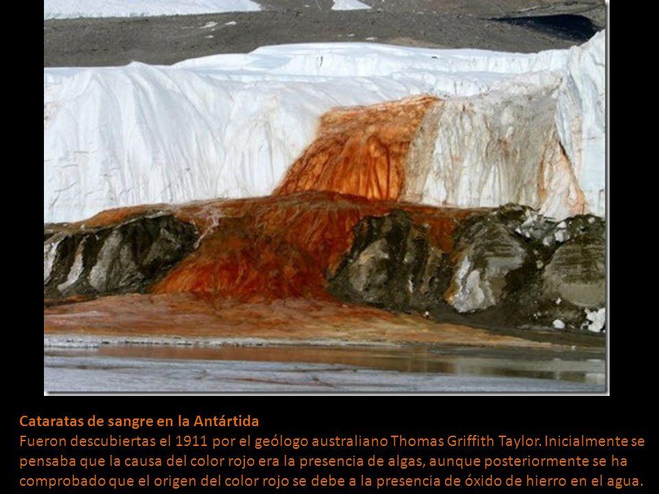 Cataratas de sangre en la Antártida Fueron descubiertas el 1911 por el geólogo australiano Thomas Griffith Taylor.