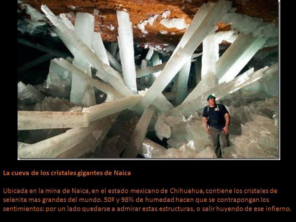 La cueva de los cristales gigantes de Naica Ubicada en la mina de Naica, en el estado mexicano de Chihuahua, contiene los cristales de selenita mas grandes del mundo.