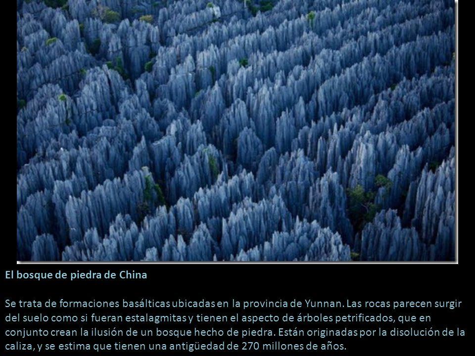 El bosque de piedra de China Se trata de formaciones basálticas ubicadas en la provincia de Yunnan.