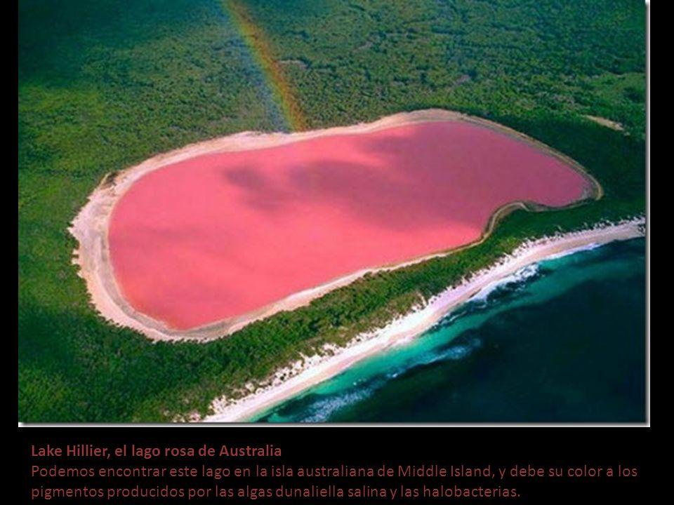 Lake Hillier, el lago rosa de Australia Podemos encontrar este lago en la isla australiana de Middle Island, y debe su color a los pigmentos producidos por las algas dunaliella salina y las halobacterias.