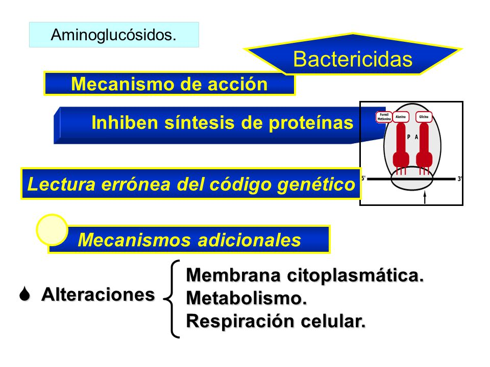 Bactericidas Mecanismo de acción Inhiben síntesis de proteínas