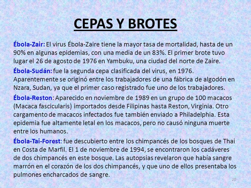 CEPAS Y BROTES