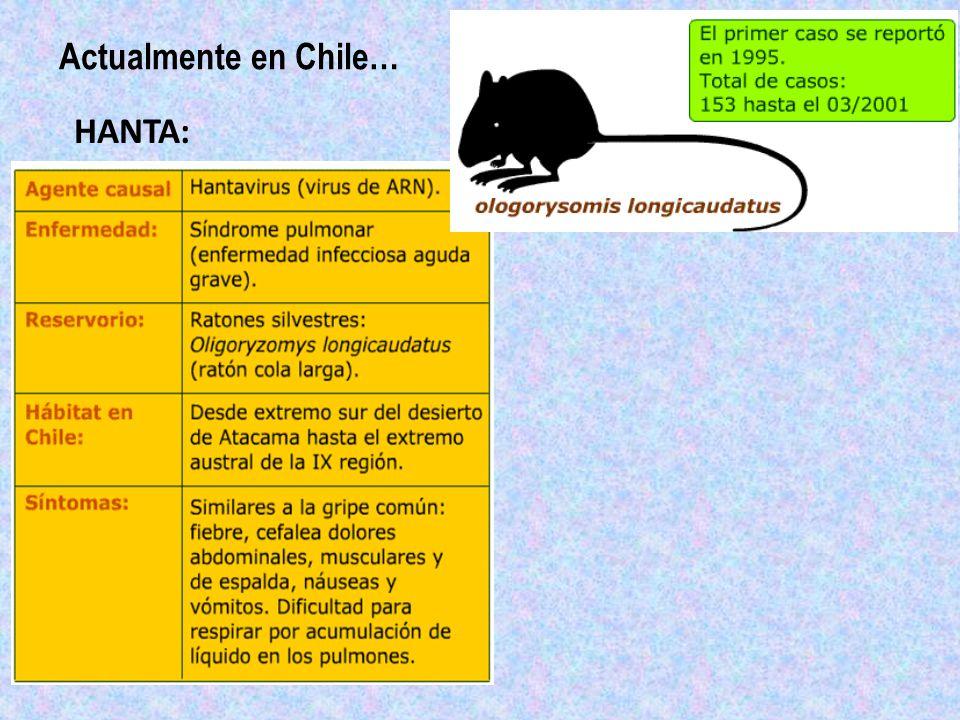 Actualmente en Chile… HANTA: