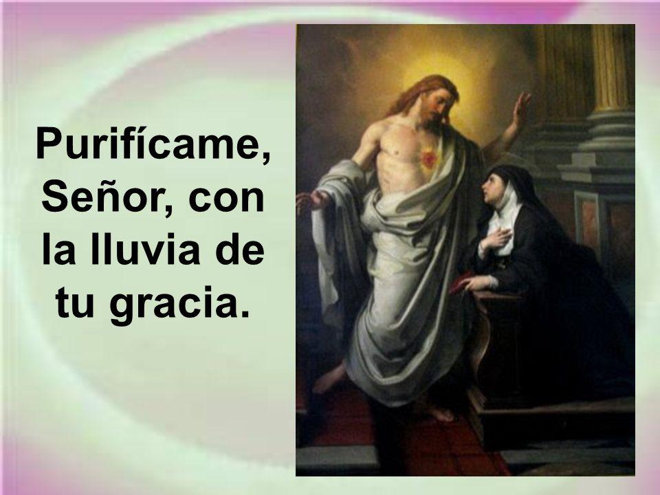 Purifícame, Señor, con la lluvia de tu gracia.