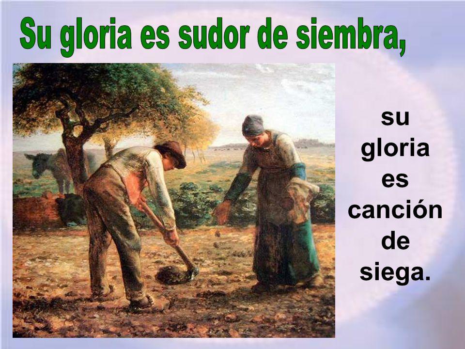 Su gloria es sudor de siembra, su gloria es canción de siega.