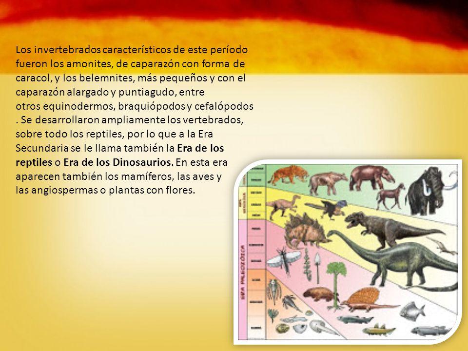 Los invertebrados característicos de este período fueron los amonites, de caparazón con forma de caracol, y los belemnites, más pequeños y con el caparazón alargado y puntiagudo, entre otros equinodermos, braquiópodos y cefalópodos.