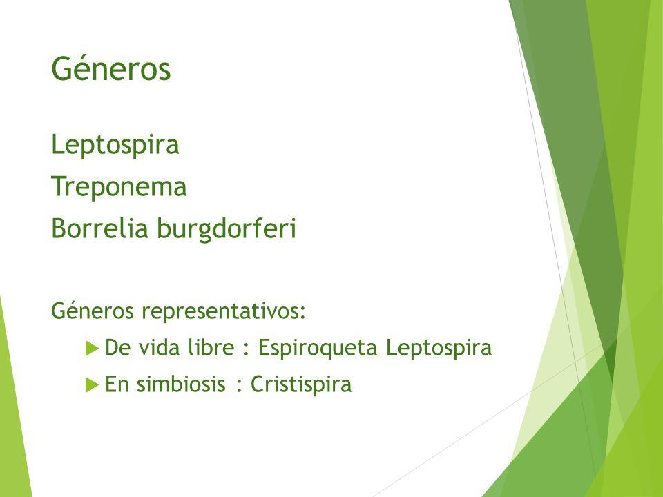 Géneros Leptospira Treponema Borrelia burgdorferi