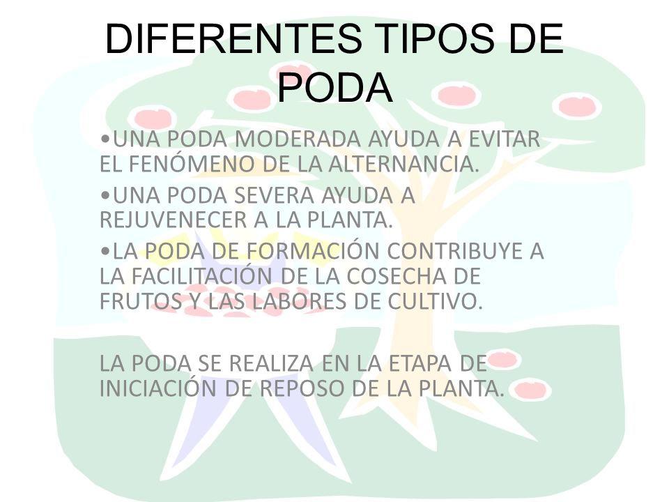 DIFERENTES TIPOS DE PODA