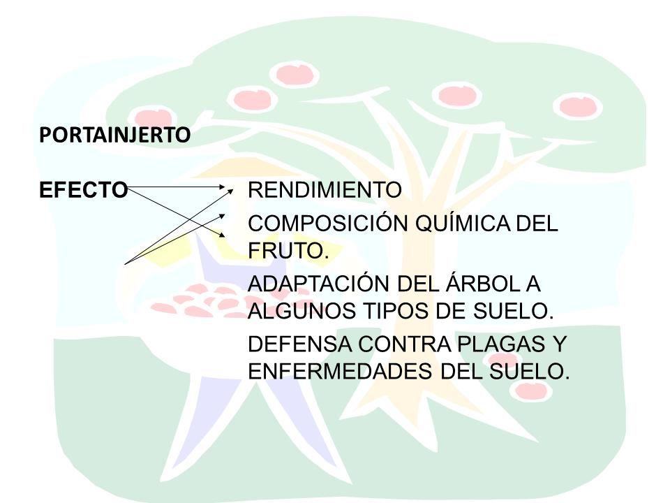 PORTAINJERTO EFECTO RENDIMIENTO COMPOSICIÓN QUÍMICA DEL FRUTO.