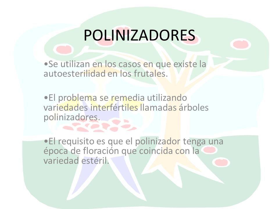 POLINIZADORES Se utilizan en los casos en que existe la autoesterilidad en los frutales.