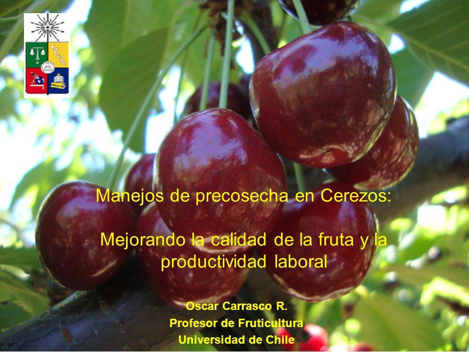 Profesor de Fruticultura