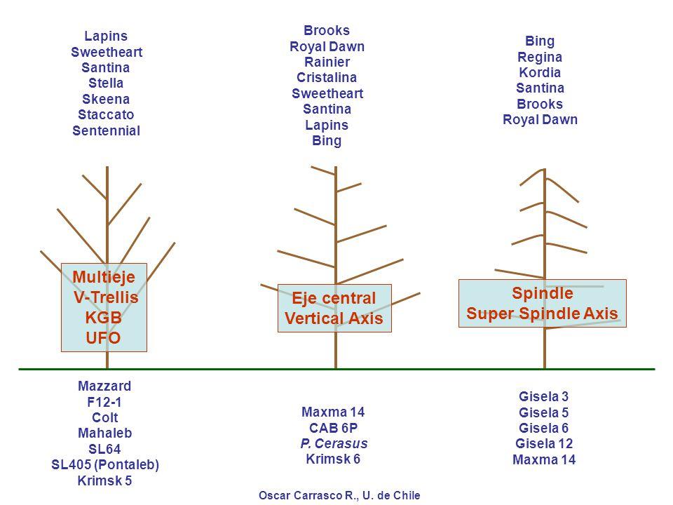 Multieje V-Trellis Spindle KGB Eje central Super Spindle Axis UFO