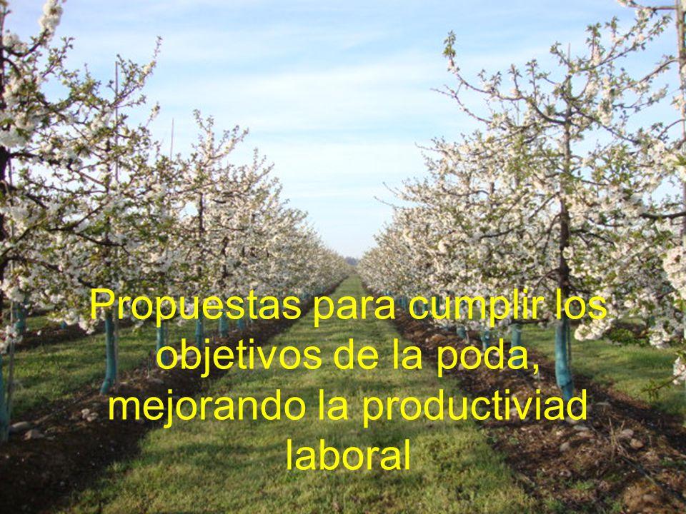 Propuestas para cumplir los objetivos de la poda, mejorando la productiviad laboral