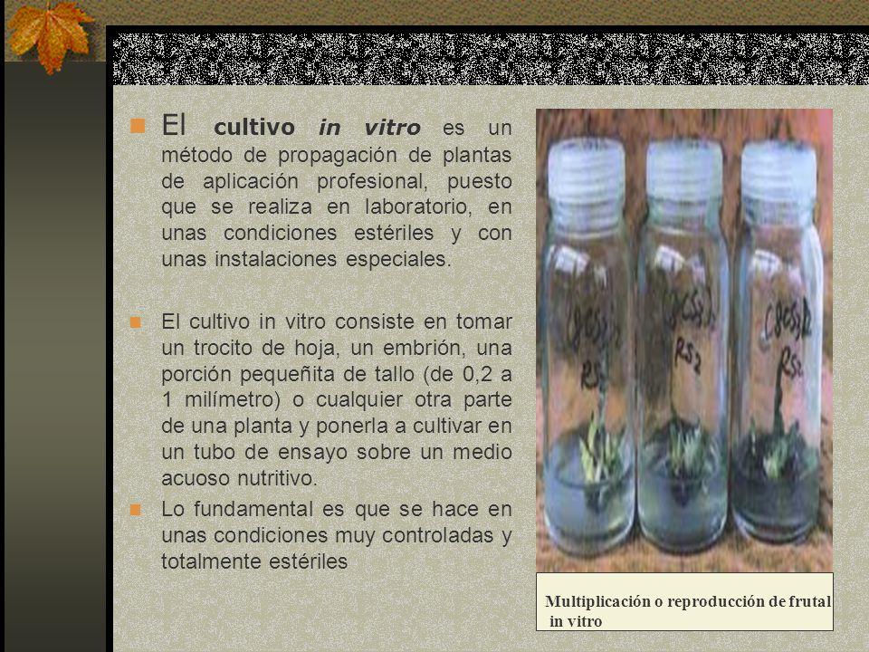 El cultivo in vitro es un método de propagación de plantas de aplicación profesional, puesto que se realiza en laboratorio, en unas condiciones estériles y con unas instalaciones especiales.