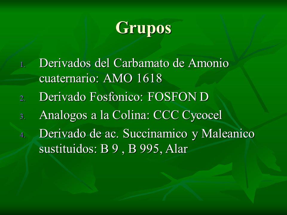 Grupos Derivados del Carbamato de Amonio cuaternario: AMO 1618
