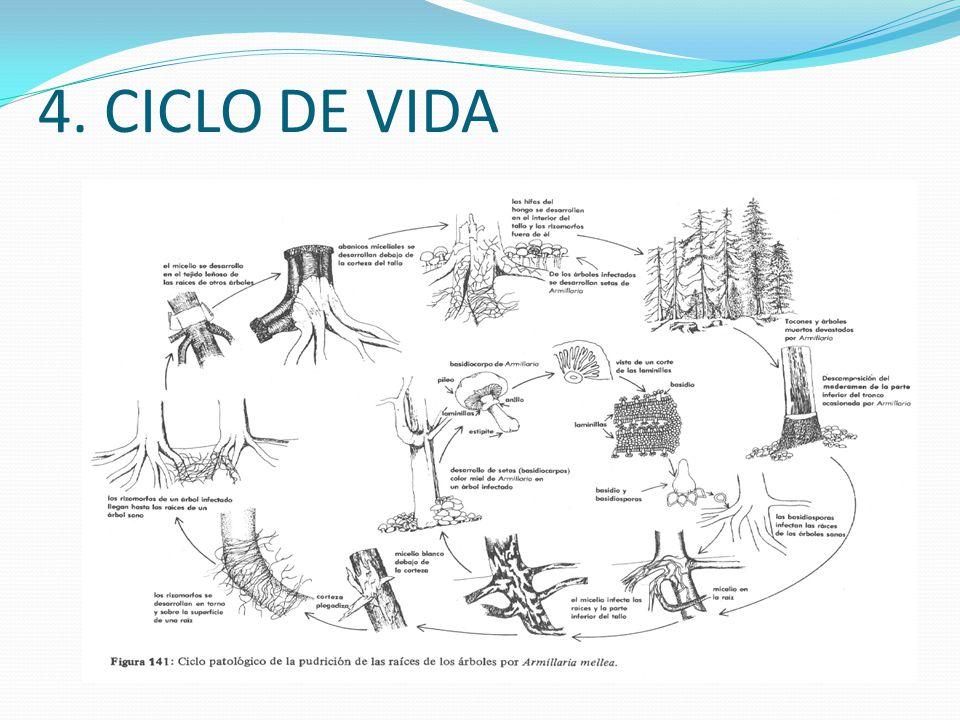 4. CICLO DE VIDA