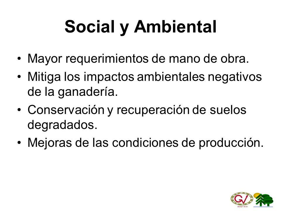 Social y Ambiental Mayor requerimientos de mano de obra.