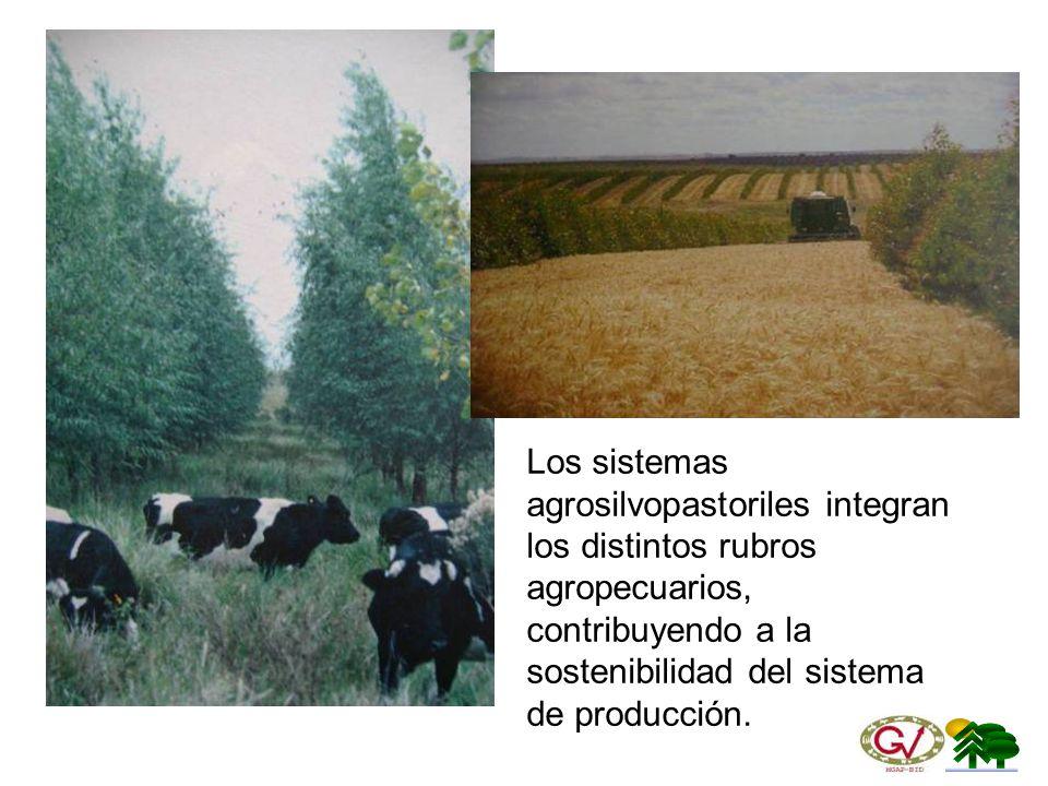 Los sistemas agrosilvopastoriles integran los distintos rubros agropecuarios, contribuyendo a la sostenibilidad del sistema de producción.