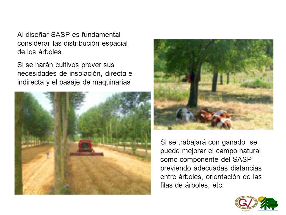 Al diseñar SASP es fundamental considerar las distribución espacial de los árboles.