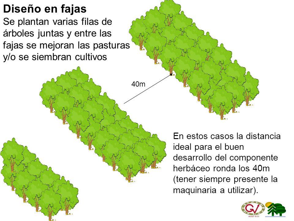 Diseño en fajas Se plantan varias filas de árboles juntas y entre las fajas se mejoran las pasturas y/o se siembran cultivos.