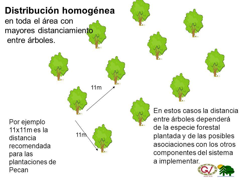 Distribución homogénea en toda el área con