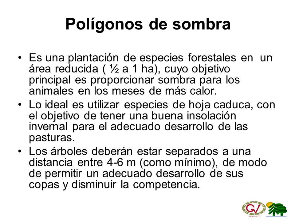Polígonos de sombra