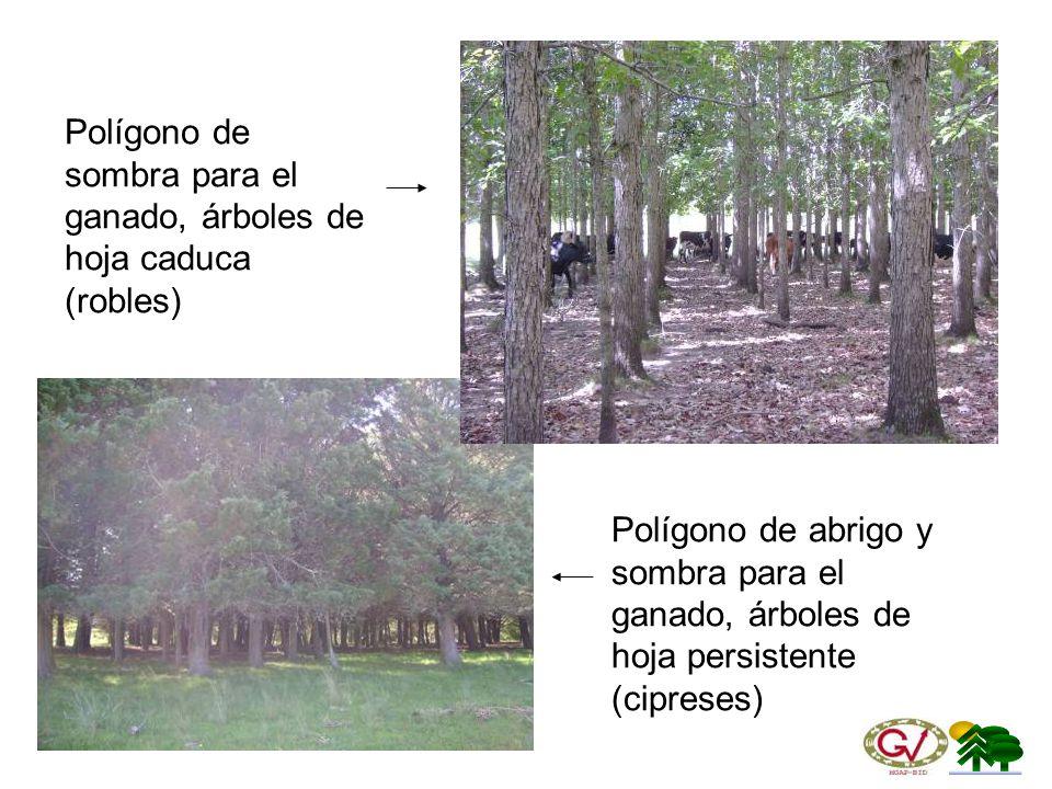 Polígono de sombra para el ganado, árboles de hoja caduca (robles)