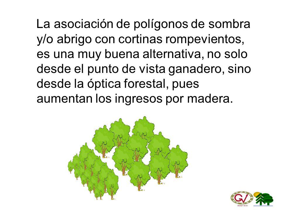 La asociación de polígonos de sombra y/o abrigo con cortinas rompevientos, es una muy buena alternativa, no solo desde el punto de vista ganadero, sino desde la óptica forestal, pues aumentan los ingresos por madera.