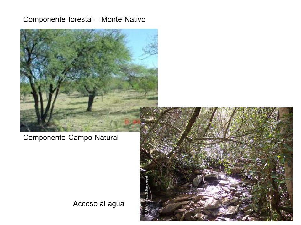 Componente forestal – Monte Nativo