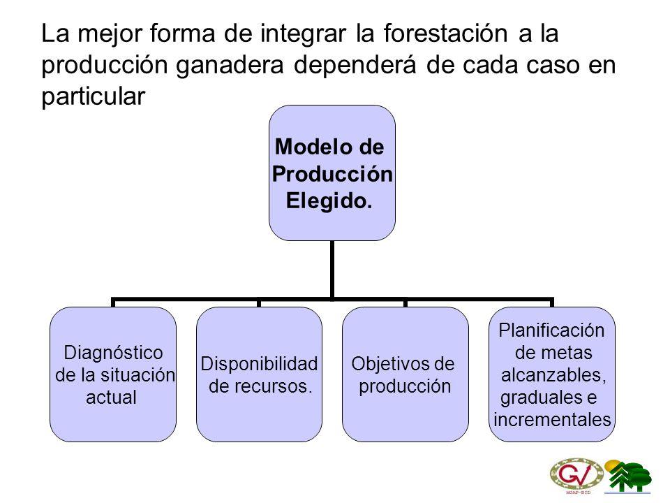 La mejor forma de integrar la forestación a la producción ganadera dependerá de cada caso en particular
