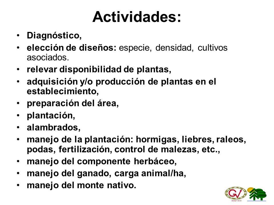 Actividades: Diagnóstico,