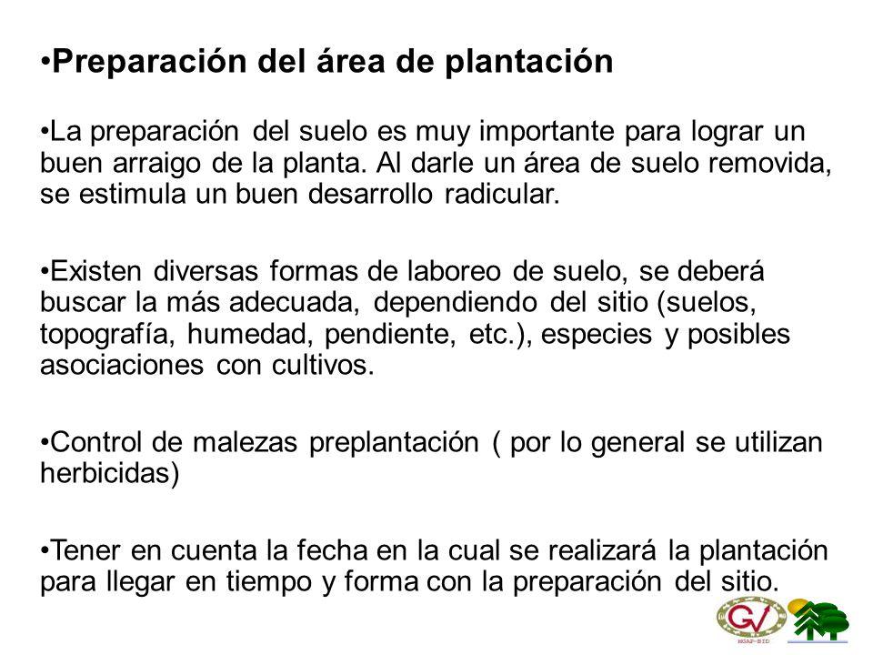 Preparación del área de plantación