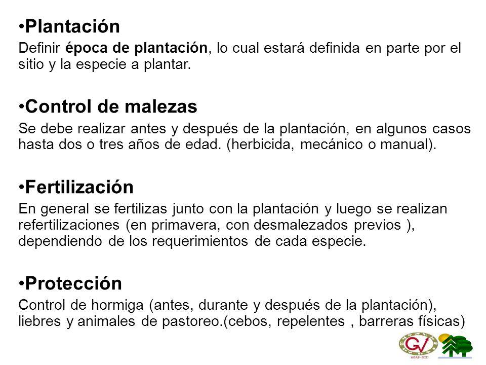 Plantación Control de malezas Fertilización Protección