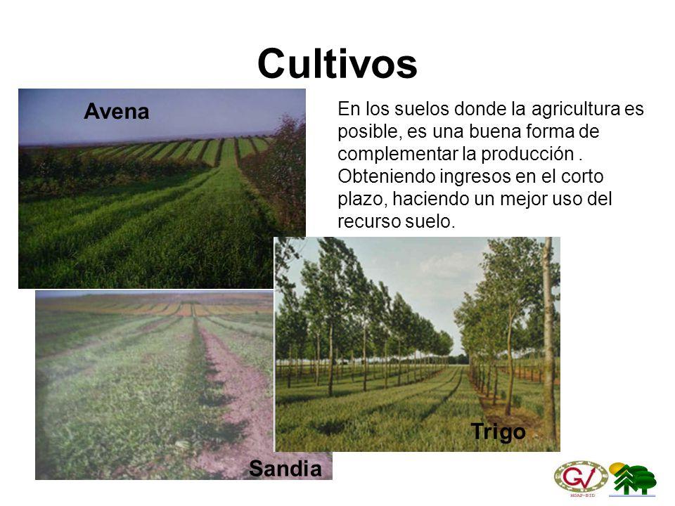 Cultivos Avena Trigo Sandia