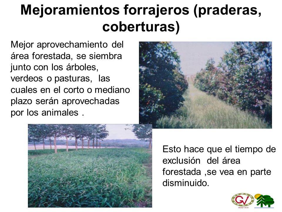 Mejoramientos forrajeros (praderas, coberturas)