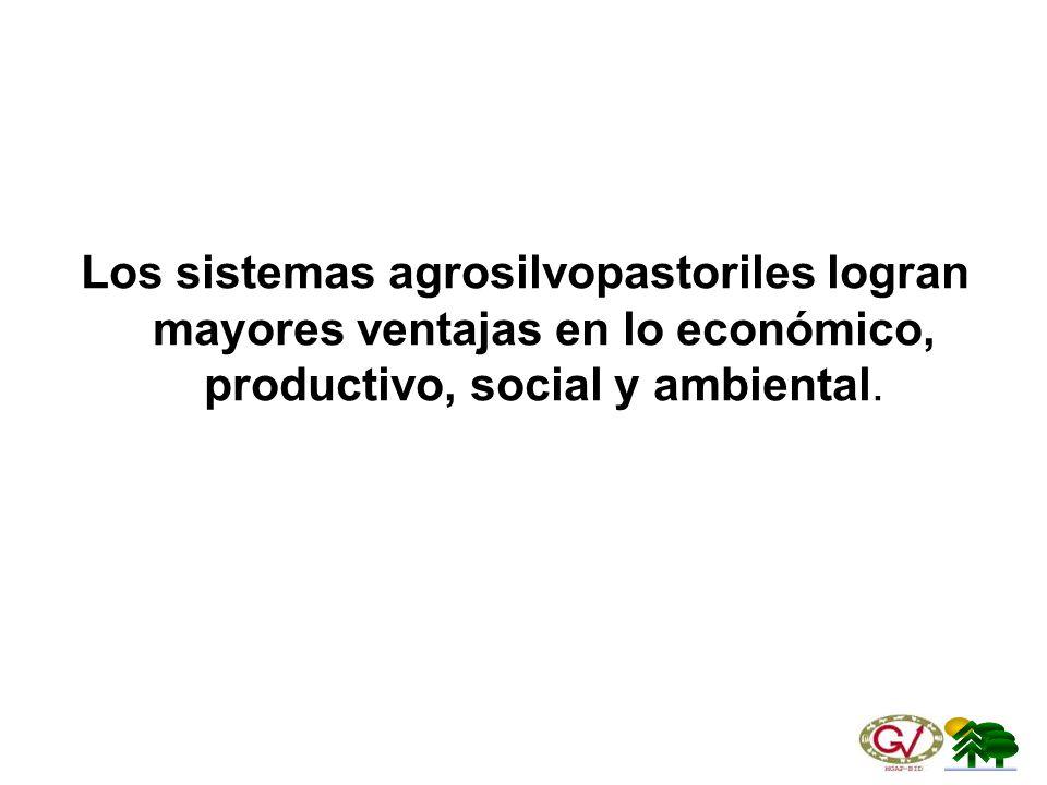 Los sistemas agrosilvopastoriles logran mayores ventajas en lo económico, productivo, social y ambiental.