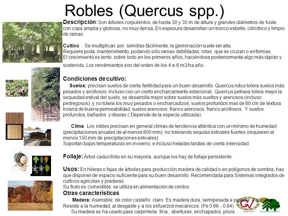 Robles (Quercus spp.)