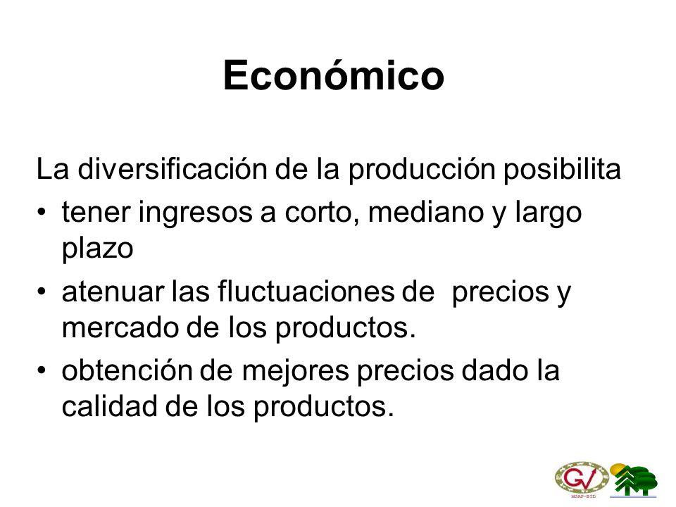 Económico La diversificación de la producción posibilita