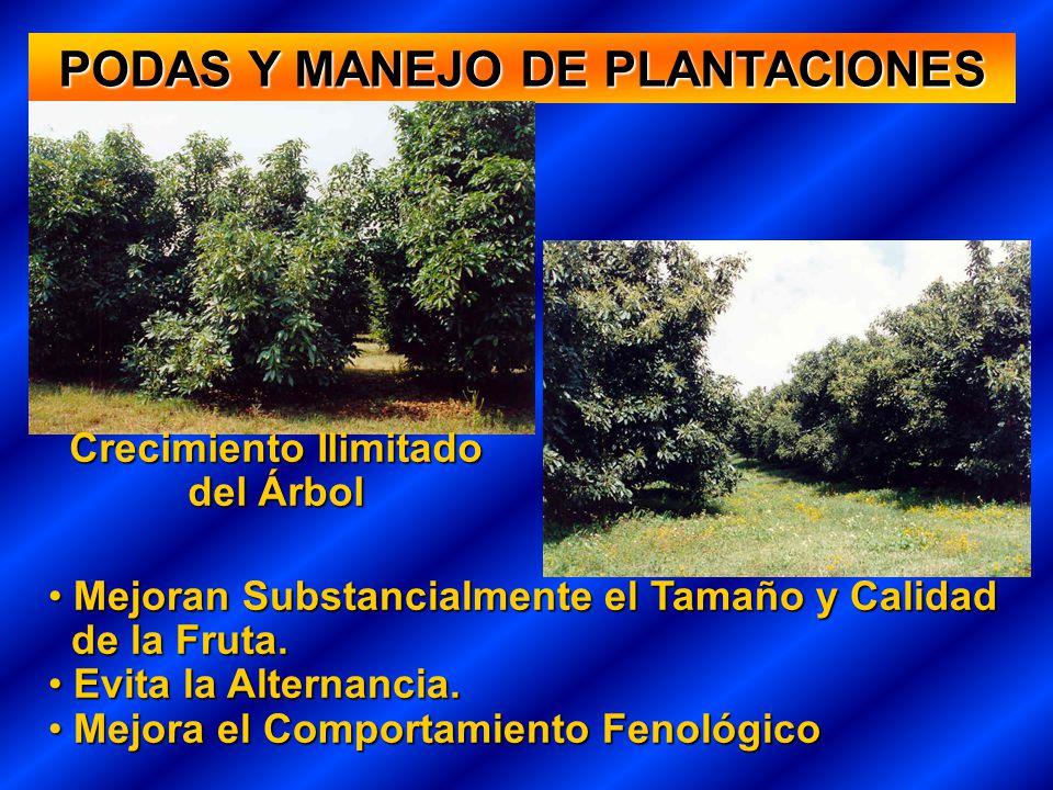 PODAS Y MANEJO DE PLANTACIONES Crecimiento Ilimitado del Árbol