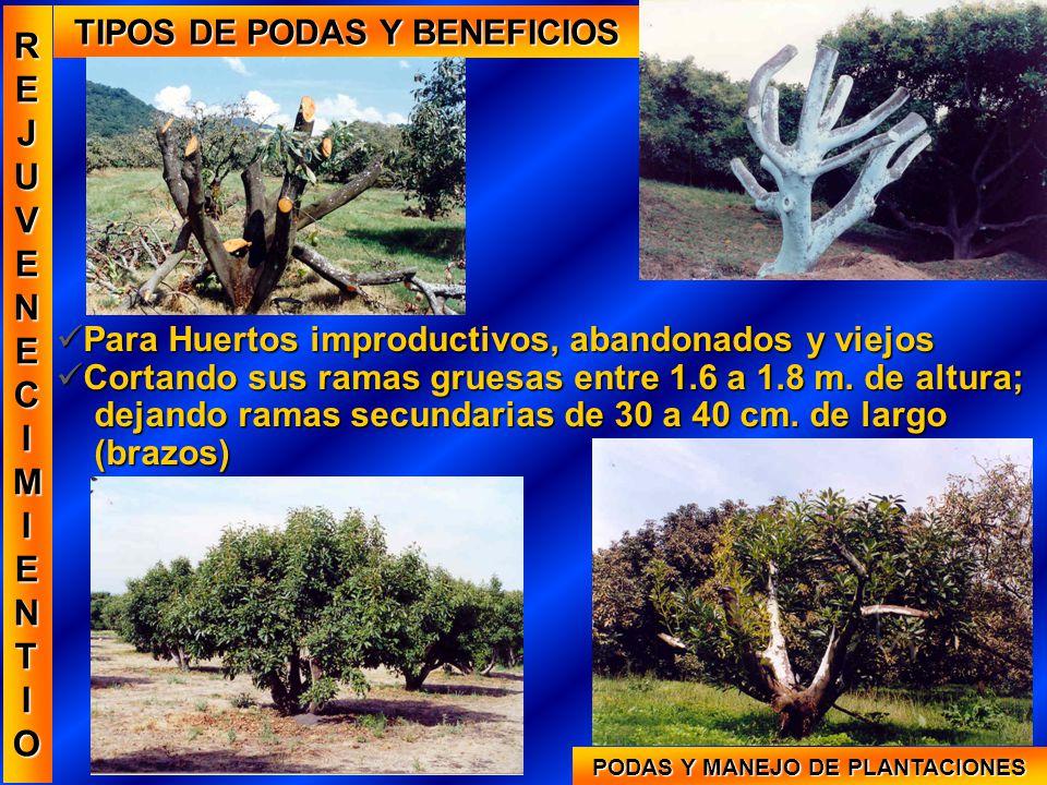 TIPOS DE PODAS Y BENEFICIOS PODAS Y MANEJO DE PLANTACIONES