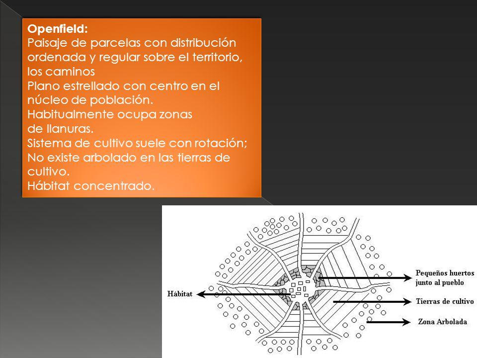 Openfield: Paisaje de parcelas con distribución ordenada y regular sobre el territorio, los caminos.