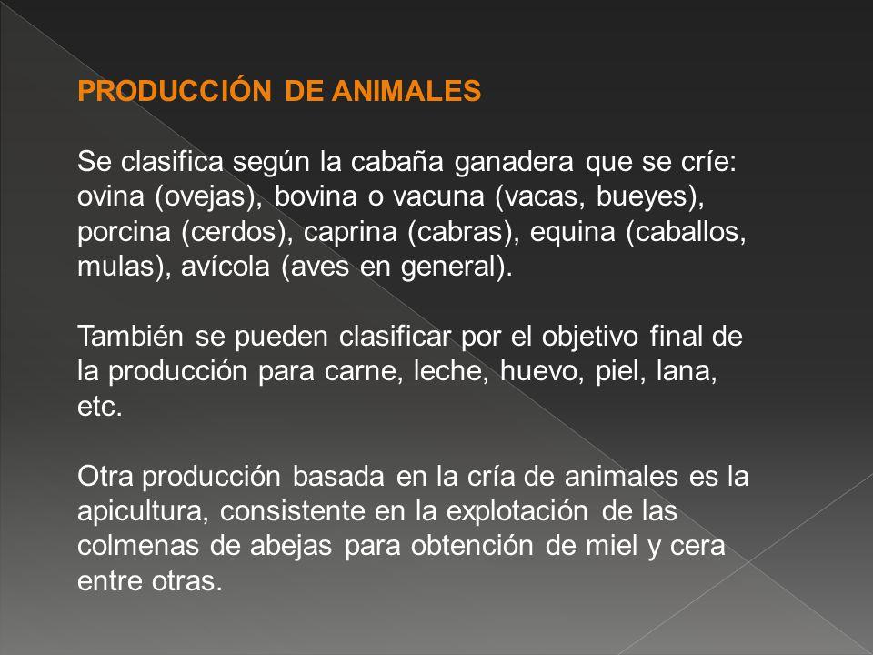 PRODUCCIÓN DE ANIMALES