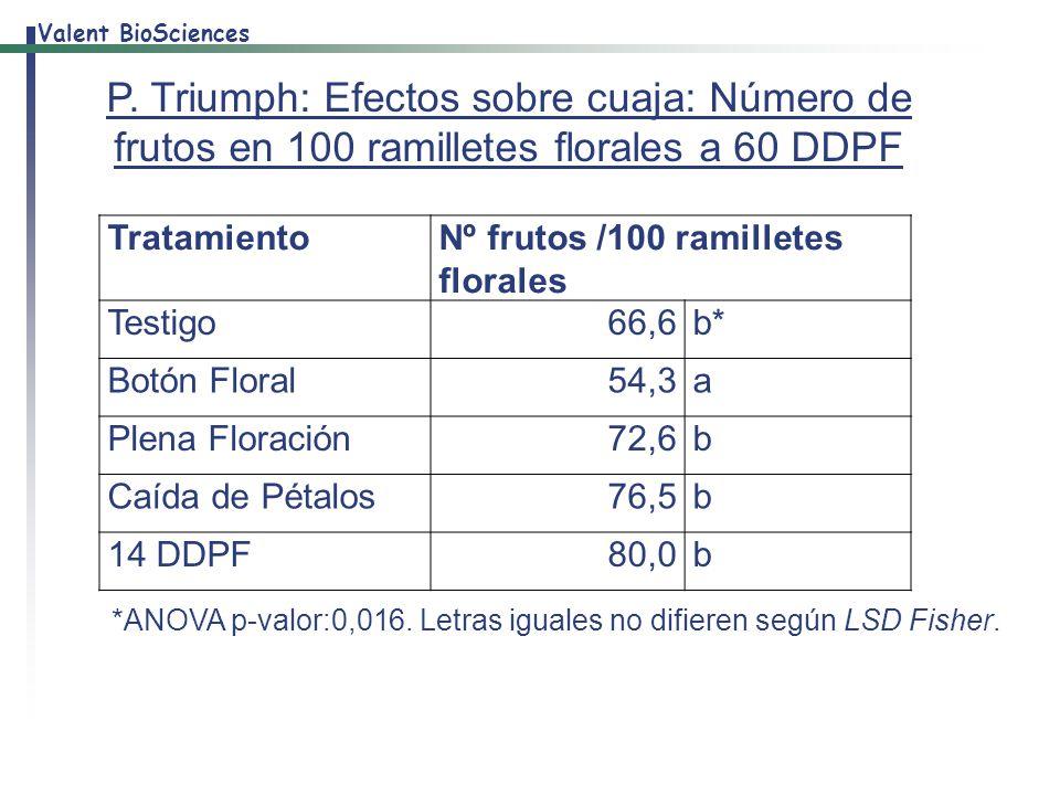 P. Triumph: Efectos sobre cuaja: Número de frutos en 100 ramilletes florales a 60 DDPF