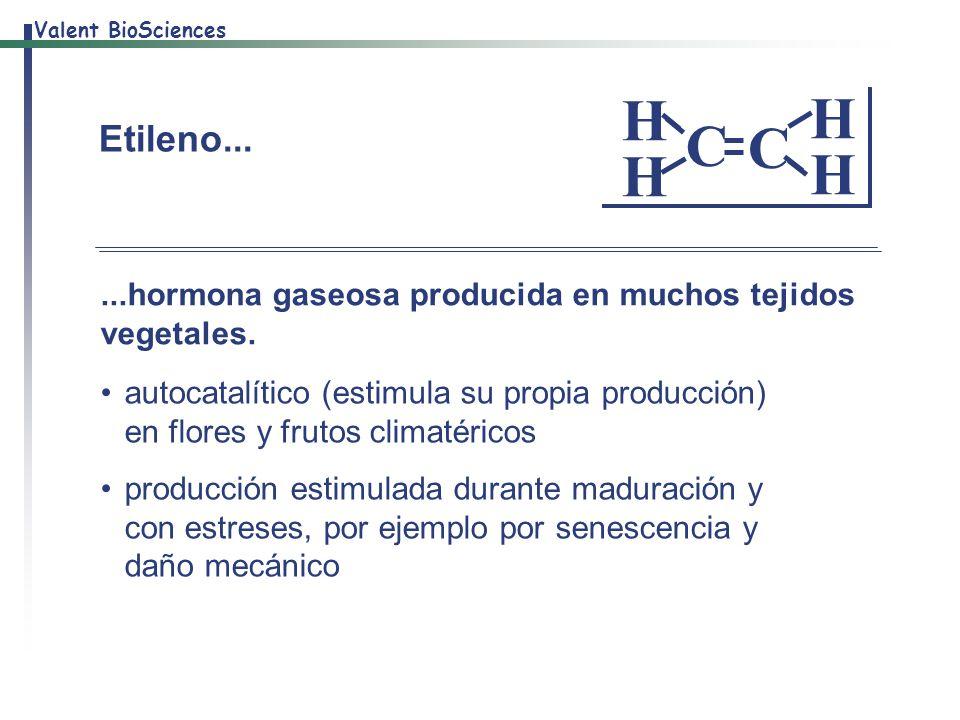 C H. Etileno... ...hormona gaseosa producida en muchos tejidos vegetales.