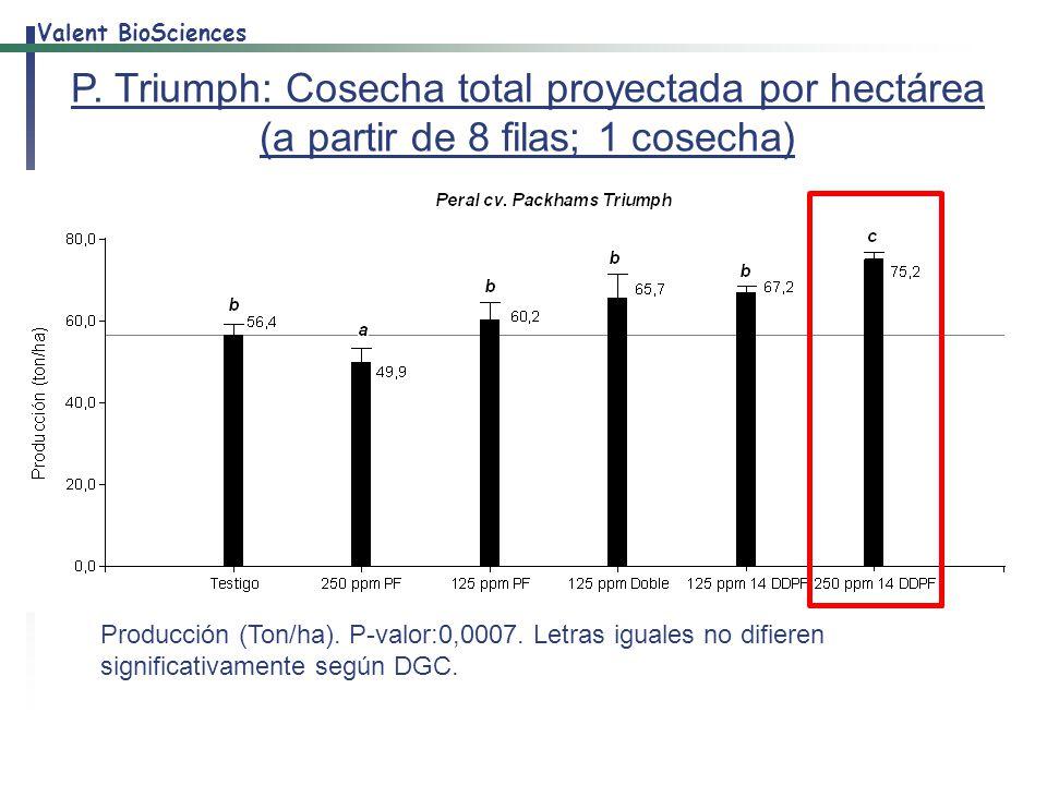 P. Triumph: Cosecha total proyectada por hectárea (a partir de 8 filas; 1 cosecha)